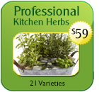Kitchen Herb Pack 2