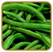 Non-Hybrid Bean Seed | Seeds of Life