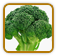 Non-Hybrid Broccoli Seed | Seeds of Life