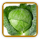 Non-Hybrid Cabbage Seed | Seeds of Life