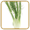 Non-Hybrid Fennel Seed | Seeds of Life