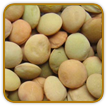 Non-Hybrid Lentil Seed | Seeds of Life