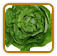 Non-Hybrid Lettuce Seed | Seeds of Life