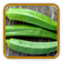Non-Hybrid Okra Seed | Seeds of Life