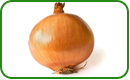 Non-GMO Onion Seeds