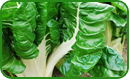 Non-GMO Swiss Chard Seeds