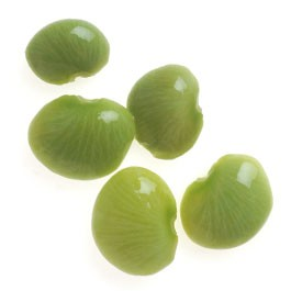 Beans: Fordhook Lima | 1 oz