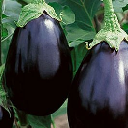 Eggplant: Black Beauty | 500 mg