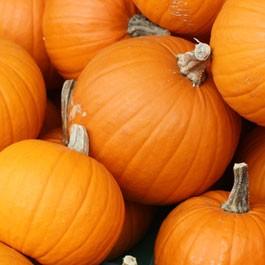 Pumpkin: Sugar Pie | 5 g