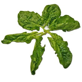 Spinach: Bloomsdale | 1 lb