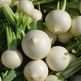 Turnip: Shogoin | 1 lb