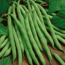 Beans: Kentucky Wonder Pole | 2 oz