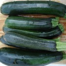 Squash: Black Beauty Zucchini | 14 g