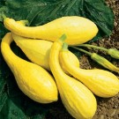 Squash: Golden Crookneck | 1/2 lb