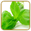 Non-Hybrid Basil Seed | Seeds of Life