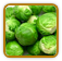 Non-Hybrid Brussels Sprouts Seed | Seeds of Life