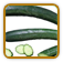 Non-Hybrid Cucumber Seed | Seeds of Life