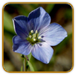 Non-Hybrid Flax Seed | Seeds of Life