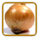 Non-Hybrid Onion Seed | Seeds of Life