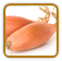 Non-Hybrid Shallot Seed | Seeds of Life