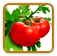 Non-Hybrid Tomato Seed | Seeds of Life