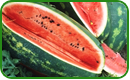 Non-GMO Watermelon Seeds