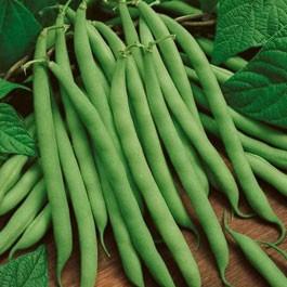 Beans: Kentucky Wonder Pole | 1 lb