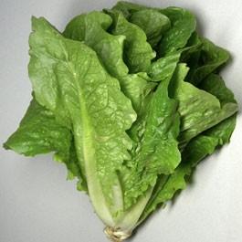 Lettuce: Parris Island Romaine | 1 g