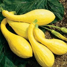 Squash: Golden Crookneck   1/2 lb