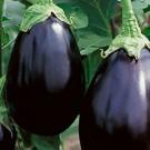 Eggplant: Black Beauty | 500 mg